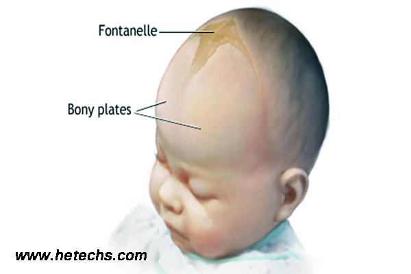 bebeklerde bıngıldak ne zaman kapanır, bebeklerin bıngıldak oluşumu, bebeklerin bıngıldağının kapanması ne zaman gerçekleşir