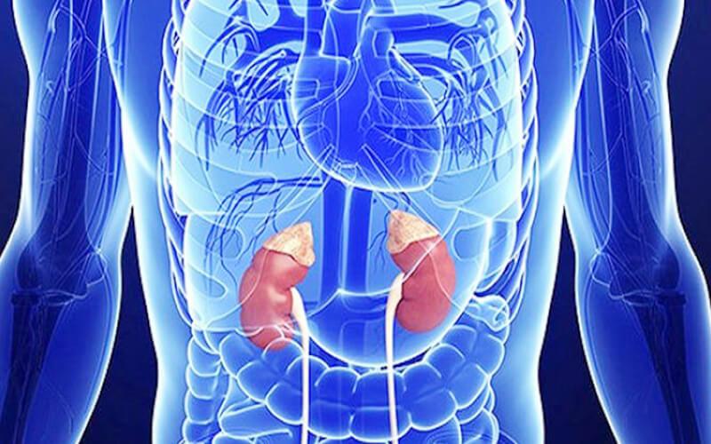 surrenal hastalıklar, surrenal hastalık belirtileri, surrenal hastalıkların tedavisi